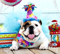 Birthday Hat For Dogs Dog HatLollipop By CreateAlley Lollipop