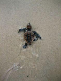 We <3 these little guys @TweenWaters - Book your adventure at Tween-Waters.com