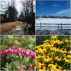 Weekly Photo Challenge: CHANGE - The Four Changing Seasons - Autumn/Winter/Spring/Summer | Mirth and Motivation #photography #seasons #change #happiness #quotes