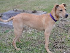 Jo Jo has been adopted! Hooray! Happy New Year, sweet girl! :-) (Posted 12-28-14)