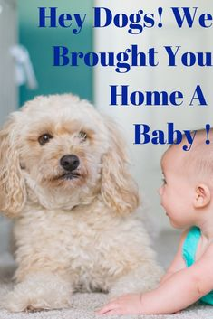 Introducing your dog to your newborn How To Introduce Dogs, How To Introduce Yourself, Baby Sounds, Baby Momma, Preparing For Baby, Baby Blog, Child Life, Child Development, Childcare