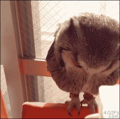 Water Your Owl Until It Blooms, It's Beautiful. Or is he angry?....