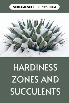 Knowing your specific Hardiness Zone is especially useful, so read on to find out more about the Hardiness Zone your succulents and cacti are in and how to protect them. Find more details on this pin! #succulents #indoorgardening #outdoorgardening #gardeningtips #hardinesszones Cacti And Succulents, Planting Succulents, Cactus Plants, The More You Know, How To Find Out, Succulent Species, Cactus Care, Plant Guide, Succulent Care