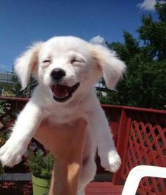 30 Puppies Having Too Much Fun | Contagious Smile