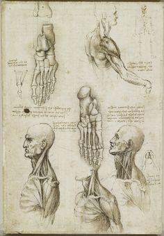 Анатомические рисунки Леонардо да Винчи в оцифрованном виде - 20