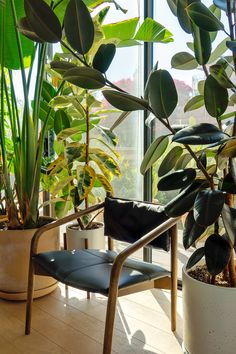 This black leather lounge chair is equal parts functional and sexy: its comfortable foam-padded seat and durable buffalo leather upholstery makes this perfect for leaning into a boisterous conversation, or for quietly contemplating your next move. Photo by @clubhousejungle. #LivingRoomIdeas #LivingRoomDecor #ModernLivingRoom #ModernLiving #PlantDecor #LoungeChair Leather Lounge, Cabin Interiors, Plant Decor, Living Room Decor, Accent Chairs, Upholstery, Black Leather, High Quality Furniture, Mid Century