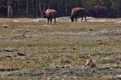 Prairie dogs dot the landscape