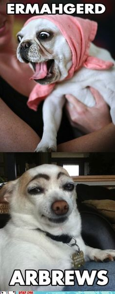 """Ermahgerd!! It almost looks as though eyebrow dog is thinking """"well, hello ladies."""" haha"""