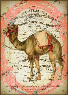 Circus: Instant Art Original Print French Camel Ready for Framing. Circus Crafts, Circus Art, Decoupage, Retro, Etiquette Vintage, Lion Print, Alpacas, Art Original, Vintage Circus