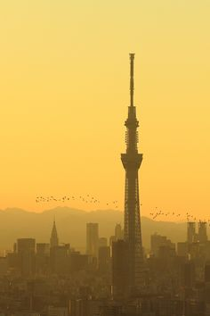 Tokyo Skytree, Japan by Teddy_y on PHOTOHITO