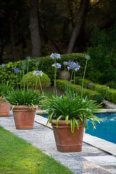 If you are working with the best backyard pool landscaping ideas there are lot of choices. You need to look into your budget for backyard landscaping ideas Plants Around Pool, Pool Plants, Potted Plants, Sun Plants, Container Plants, Container Gardening, Mediterranean Garden Design, Pot Jardin, Garden Planters