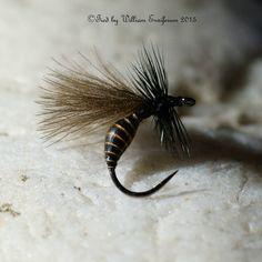black Ant #15