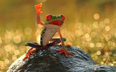 """"""" I iz not sayin' 'hello'. I yam the mayor of dis swamp and givin' a speech; furthermore............"""""""