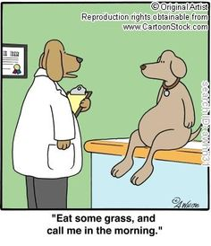 """""""Lay on some grass,"""" the vet prescribed!"""