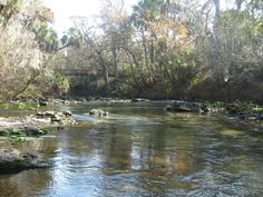 Hillsborough River, Florida