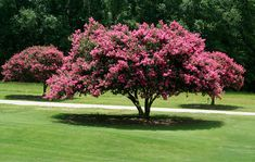 Choosing Small Trees for a Big Impact | February 2011 eNewsletter