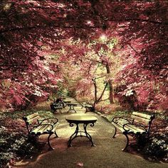 Garden with paths, benches, and red-leafed trees?