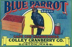 Boston, Massachusetts, Blue Parrot Brand Cape Cod Cranberry Label