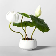 x Artificial Lotus Plant In Pot Green/White - Opalhouse Real Plants, Faux Plants, Potted Plants, Garden Plants, House Plants, Shade Garden, Ikebana Arrangements, Flower Arrangements, Lotus Plant