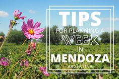 Learn all you need to know to make the most of your time in Mendoza, Argentina. Includes an itinerary and recommended wineries! http://rebeccasinternationalkitchen.com/tips-for-making-the-most-of-your-time-in-mendoza-argentina/