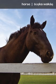 "Do you know the LAKOTA word for ""Horse""?"