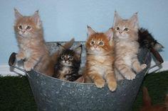 Washtub full of Kittens