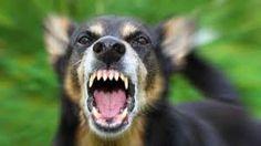 Resultado de imagen para perro mordiendo una mano