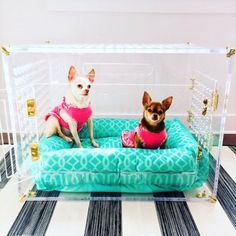 Clear acrylic pet crate, no more ugly crates in your living room! Modern Dog Houses, Picnic Blanket, Outdoor Blanket, Pet Furniture, Acrylic Furniture, Pet Dogs, Pets, Pet Gate, Pet Shop