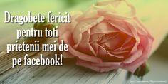 Dragobete Dragobete fericit pentru toti prietenii mei de pe facebook! I Love You, Valentines, Facebook, Rose, Flowers, Balcony, Valentine's Day Diy, Te Amo, Pink