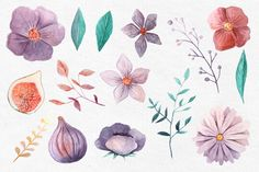Watercolor floral set with purple and violet flower on Behance