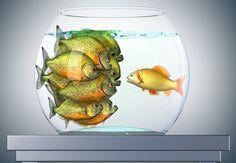 How to influence without authority Goldfish, Brush Set, Wine Glass, Author, Illustration, Coaching, Image, Career Quotes, Professional Development