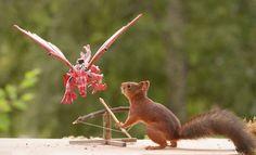 Shooting A Dragon  squirrel