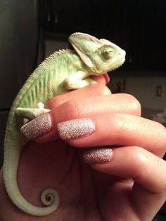 A little cute chameleon really sets off a mani