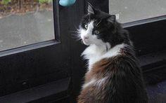 Casper, o gato que andava de ônibus | O Curioso e Cia. traz hoje pra você uma história um tanto bizarra. Já imaginou um gato que, todos os dias, pega o ônibus, passeia pela cidade e volta? Esse gato existiu. Casper, um gato da cidade de Plymouth (Inglaterra), fazia exatamente isso. Veja a história dele. http://curiosocia.blogspot.com.br/2013/04/casper-o-gato-que-andava-de-onibus.html