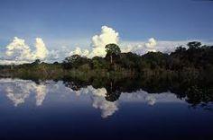 Resultado de imagem para FOTOGRAFOS AMAZONIA