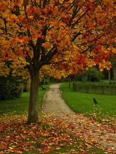 Autumn tree with leaves and dry grass Fall Pictures, Nature Pictures, Beautiful Places, Beautiful Pictures, Autumn Scenes, Autumn Aesthetic, Seasons Of The Year, Autumn Inspiration, Image Hd