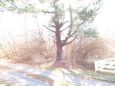 The Bright Tree: ISO 100, F3.1, 1/50, Custom Balance