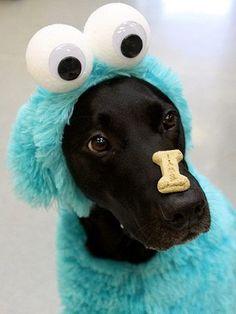 dog custome13