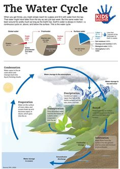Ever wonder where that water you're drinking comes from? Teach kids about the path that water takes from the earth to the atmosphere and back again with this downloadable infographic.