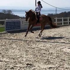 inka's concentré pendant la leçon de dressage 😊 #switzerland🇨🇭 #horse #dressag Dressage, Switzerland, Horses, Pendant, Animals, Animales, Animaux, Pendants, Animal