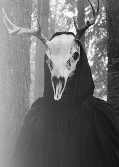 The watcher of the forest