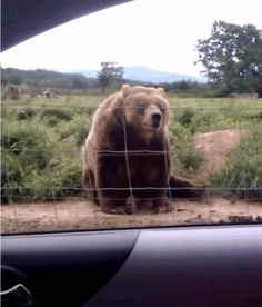 Fun-Loving Animals: The Softer Side of the Wild Gifs, Fun Loving, Animal Rescue Shelters, Brown Bear, Animal Kingdom, Pet Adoption, Picture Video, Baby Animals, Cute Pictures