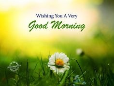 Good Morning Images, Good Morning Quotes, Morning Greetings Quotes, Dear Mom, Thought Provoking, Wish, Gd Mrng, Thoughts, Mornings