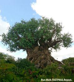 Animal Kingdom Park, Walt Disney World Resort, Tree of Life