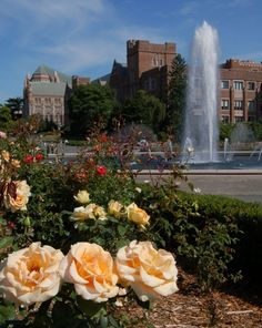 A view of Rainier Vista, Drumheller Fountain and the rose garden! #youW Photo by Eric Chudler