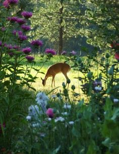 ♡♡♡how very beautiful♡♡♡ Deer in the meadow♡♡♡ Nature Animals, Animals And Pets, Cute Animals, Beautiful Creatures, Animals Beautiful, Tier Fotos, Parcs, Belle Photo, Beautiful World