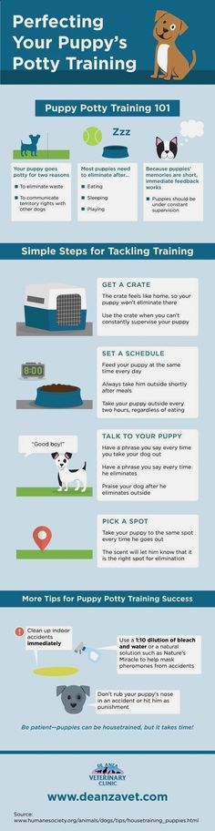 New Dog Training Ideas - CLICK THE IMAGE for Lots of Dog Care and Training Ideas. #dog #dogcommandstraining