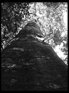 The Watcher of the Trail of the Primates, Atlantic Forest, Tijuca National Park, Rio de Janeiro, Brasil © Antonio Carlos Teixeira 2014 #natureza #natureza_brasileira #rio_de_janeiro #atlantic_forest #nature #brazilian_nature #art_digital #digital_art #art #arte_digital #arte #arte_alternativa #alternative_art #brazilian_art #fotografia_digital_brasileira #brazilian_art_photo elfwood@nym.hush.com