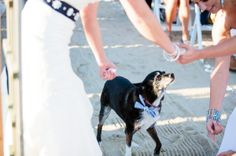 A beach-and-boat-house Cape Cod wedding with a canine ring bearer - and it's a lesbian wedding. literally perfect.