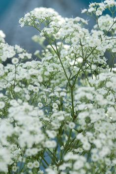 Kies eens voor vaste planten, ze komen elk jaar weer terug en vragen nauwelijks onderhoud. Droom je van veel verschillende bloemen in weelderige borders? Dan zijn romantische vaste planten de oplossing.